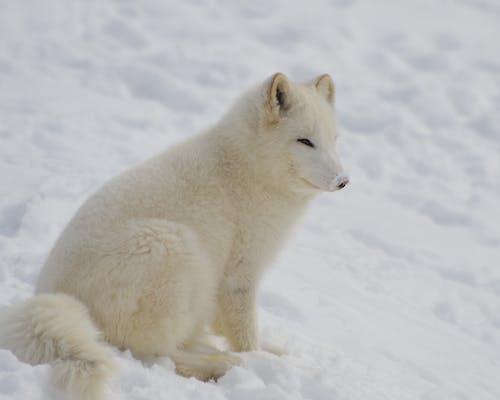 Základová fotografie zdarma na téma divočina, divoký, kožešina, led