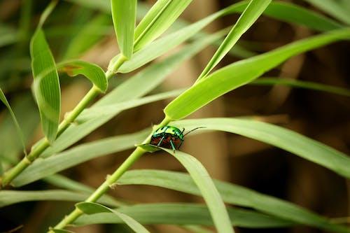 Foto d'estoc gratuïta de ales, animal, beetle, biologia