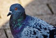 bird, animal, blur