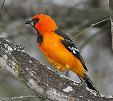Free stock photo of wood, nature, bird, animal