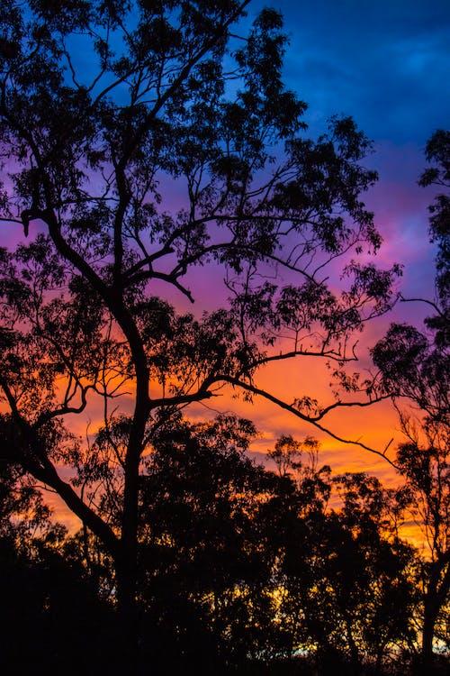 Foto stok gratis alam, bagus, bayangan hitam, matahari sore
