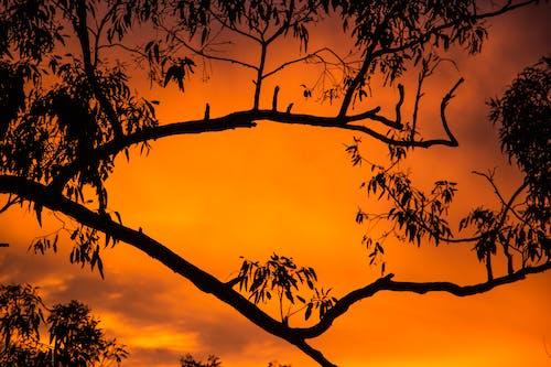 Darmowe zdjęcie z galerii z drzewa, naturalny, piękny, pomarańcza