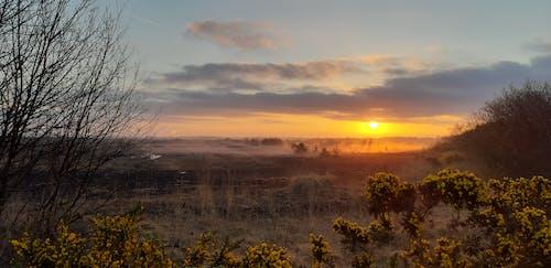 Free stock photo of bogland, gorse, sunrise