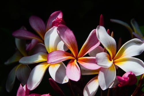 Darmowe zdjęcie z galerii z #natura, biały, piękne kwiaty, piękny kwiat