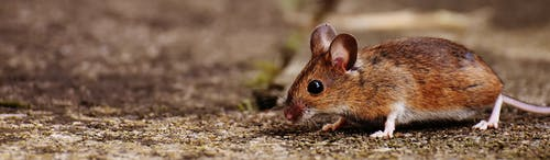 全景, 動物, 可愛, 哺乳動物 的 免費圖庫相片