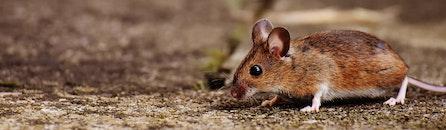animal, cute, ground
