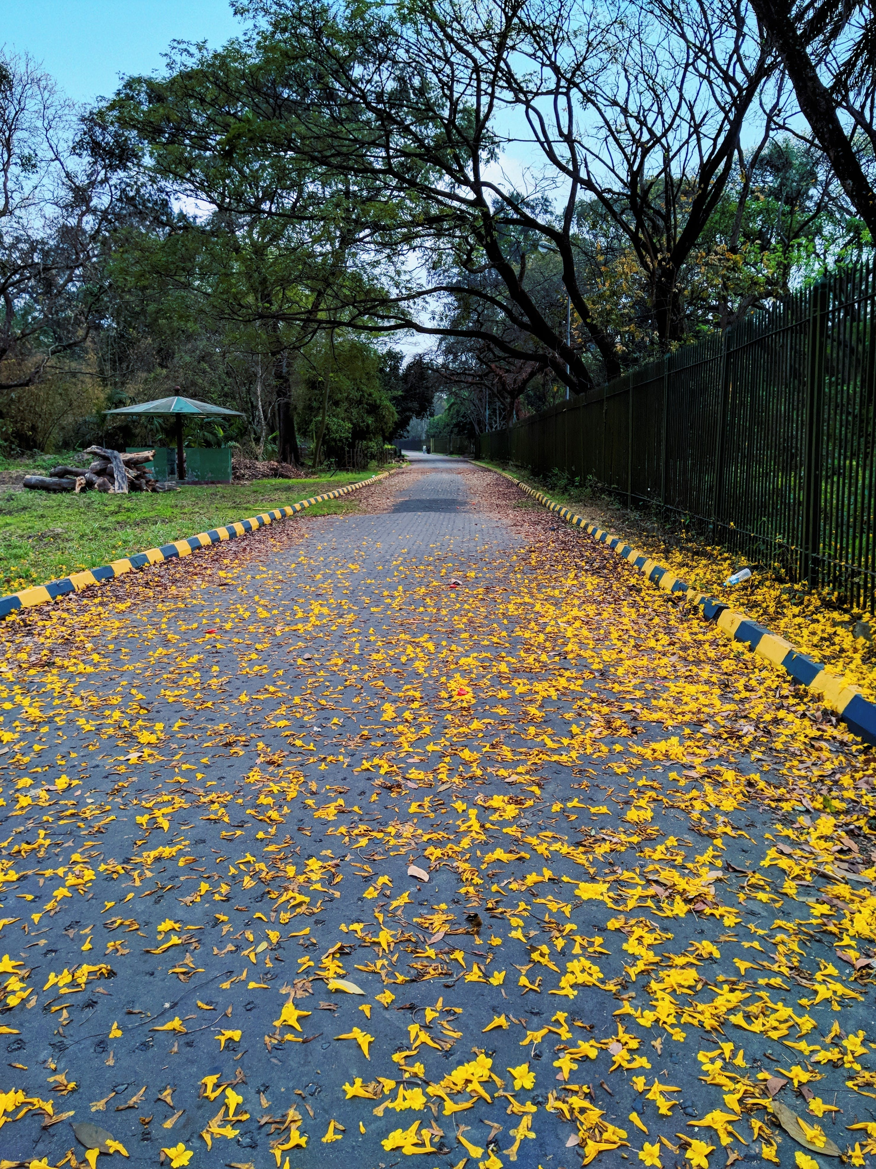 Free stock photo of flower in road, Good Morning