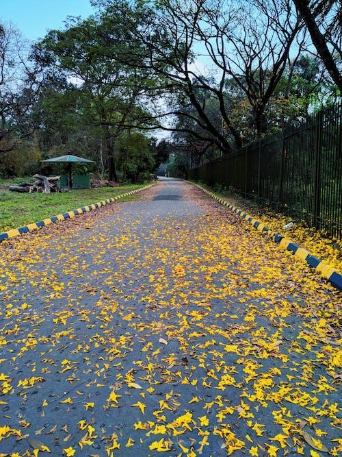 Foto stok gratis bunga di jalan, Selamat pagi