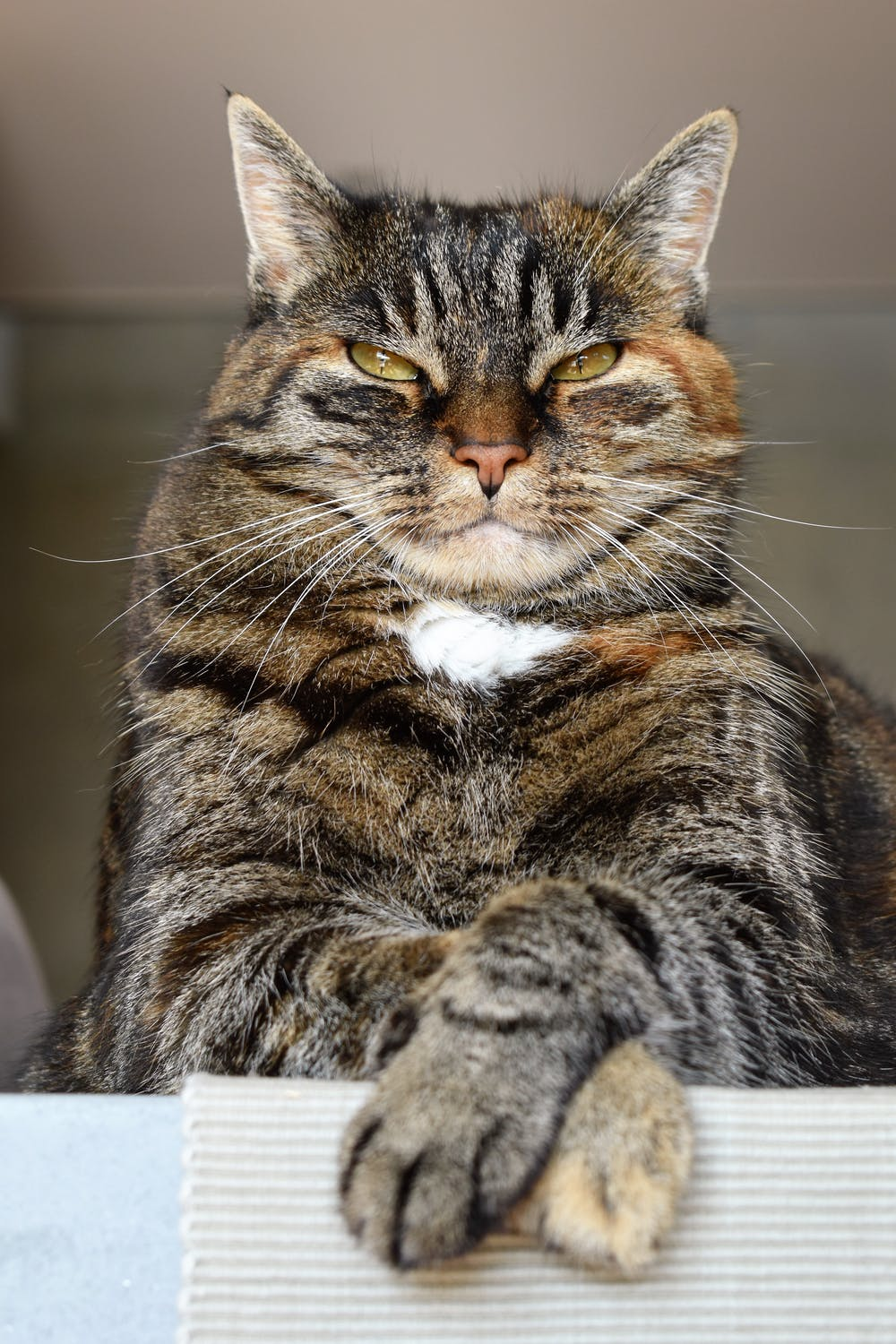 Signs that cats are angry