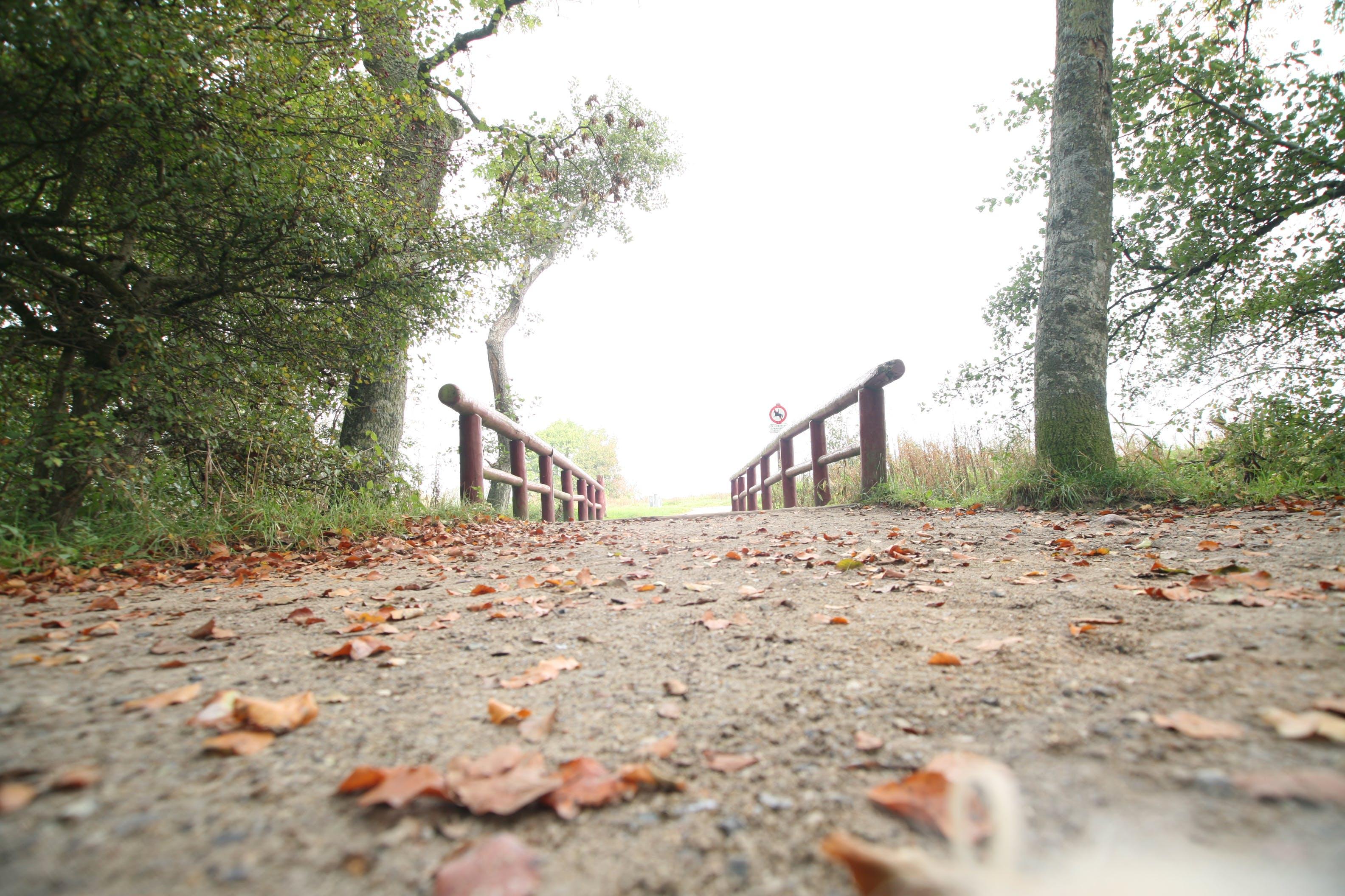 Kostenloses Stock Foto zu bäume, blätter, brücke, fußweg