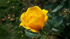 summer, garden, yellow