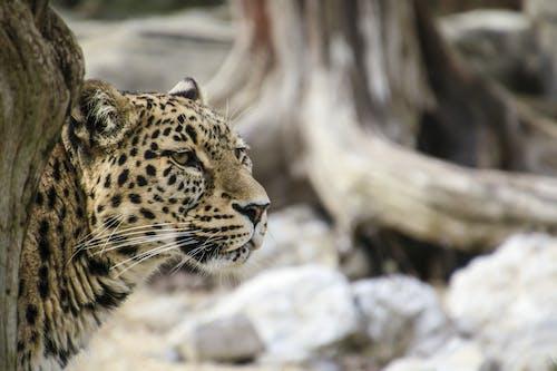 avcı, bulanıklık, doğa, etobur içeren Ücretsiz stok fotoğraf