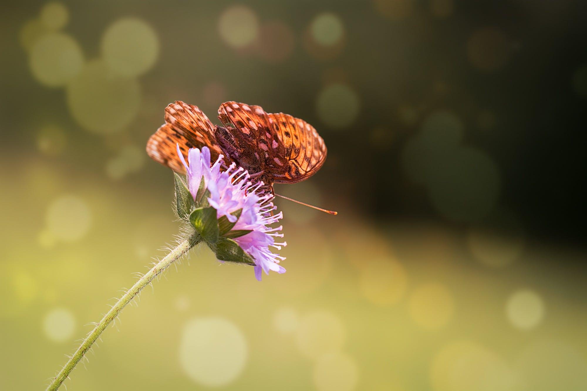 Free stock photo of nature, summer, animal, flower