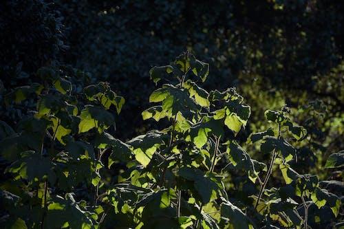 Darmowe zdjęcie z galerii z jasny, krzak, krzew, las