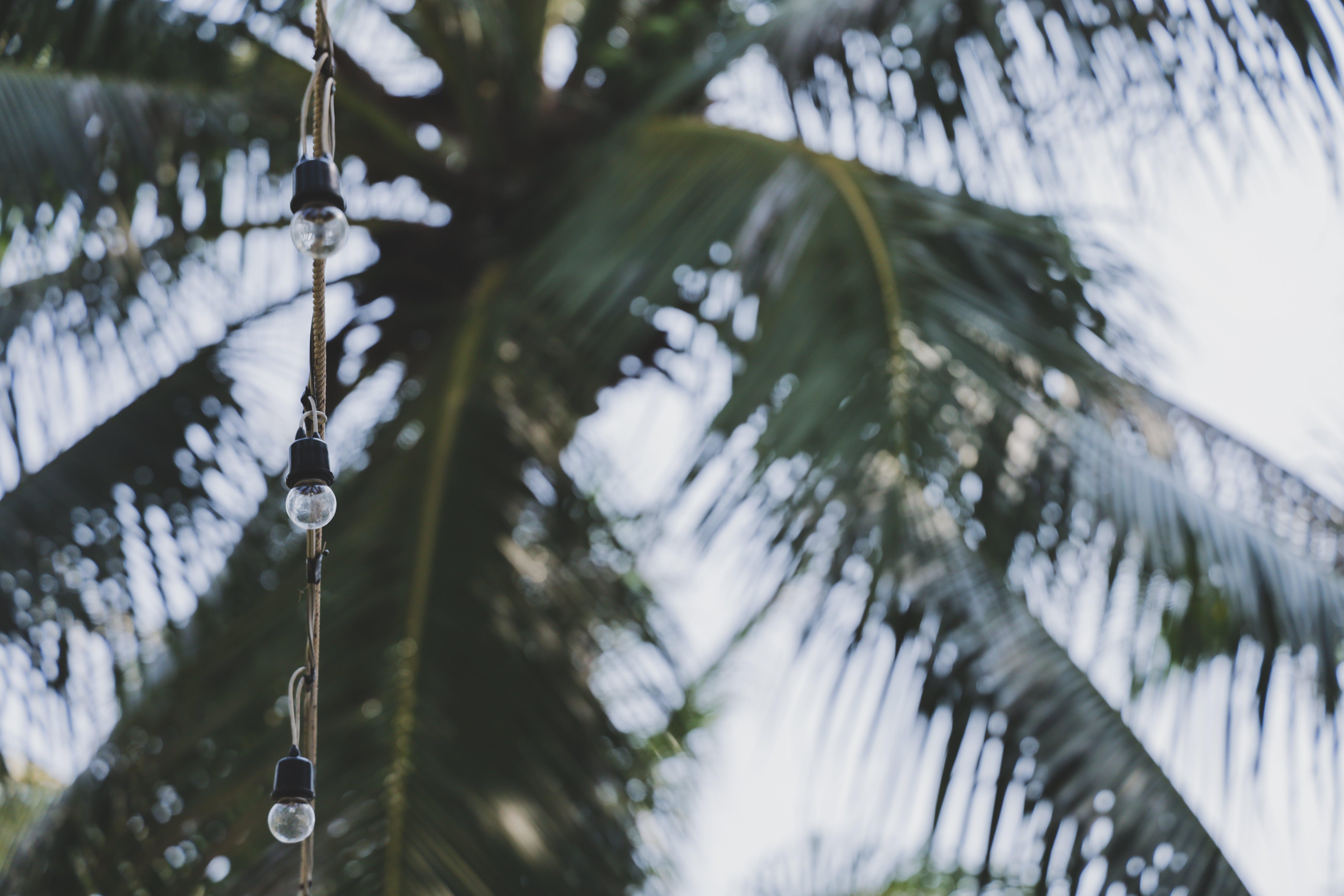 Foto d'estoc gratuïta de bokeh, bombetes, coco, concentrar-se