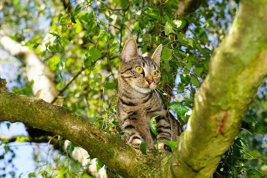 Free stock photo of animal, pet, cute, tree