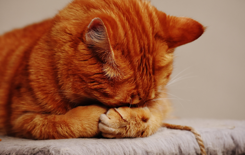 Orange Tabby Cat on Brown Surface