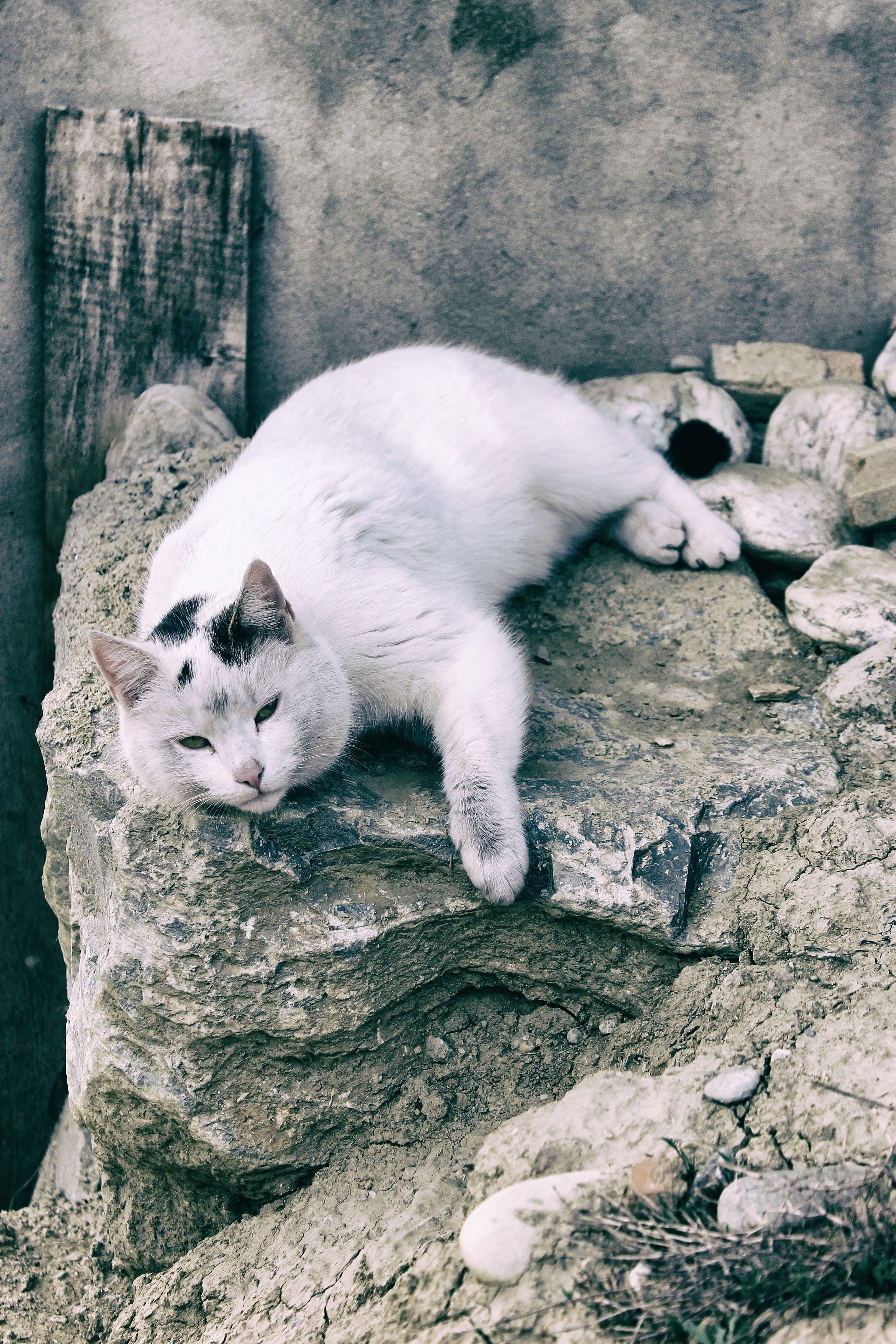 Cat Lying Down on Gray Rock