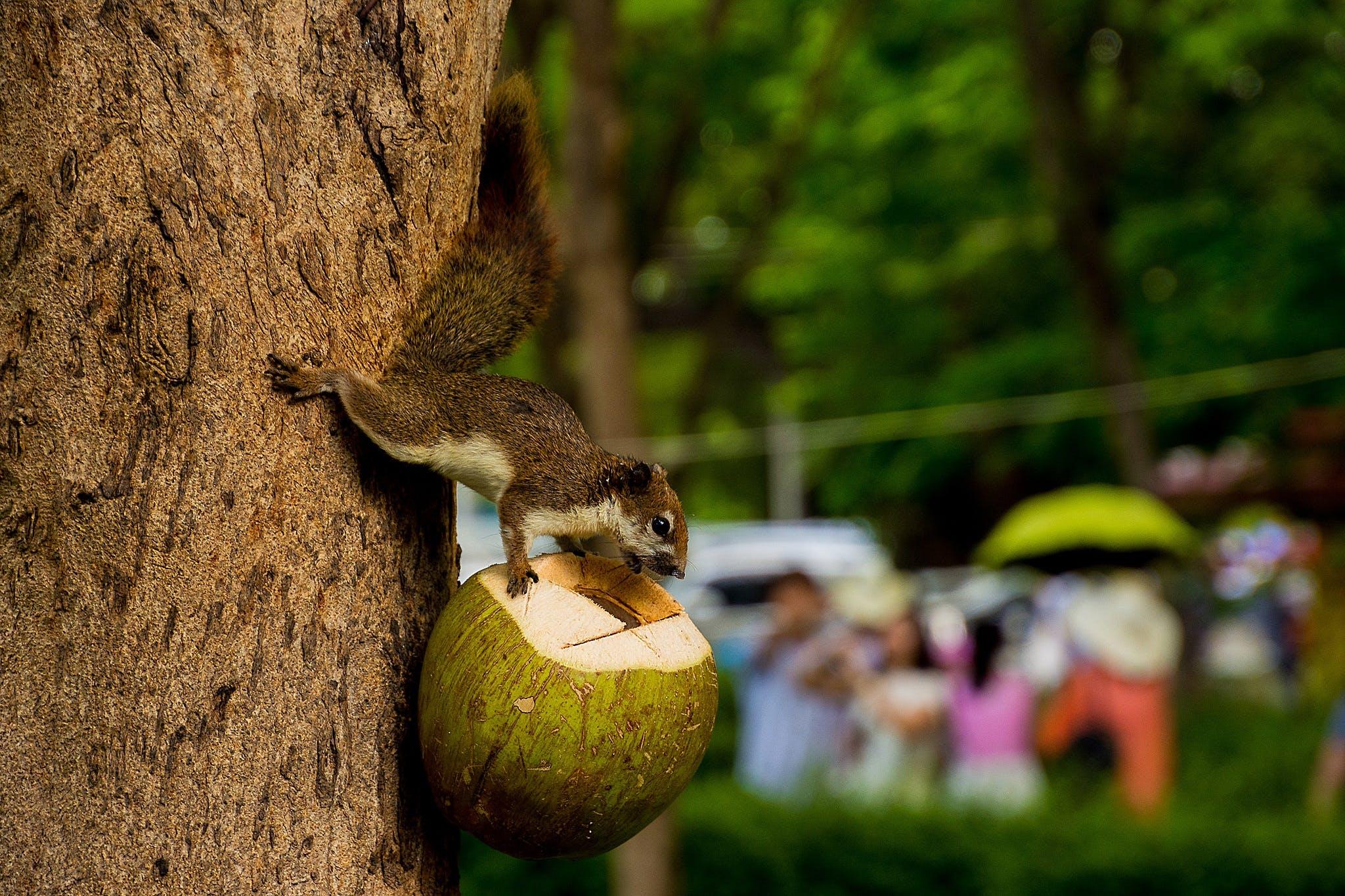 animal, blur, coconut