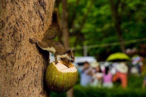 Gratis lagerfoto af dagslys, dyr, egern, folk