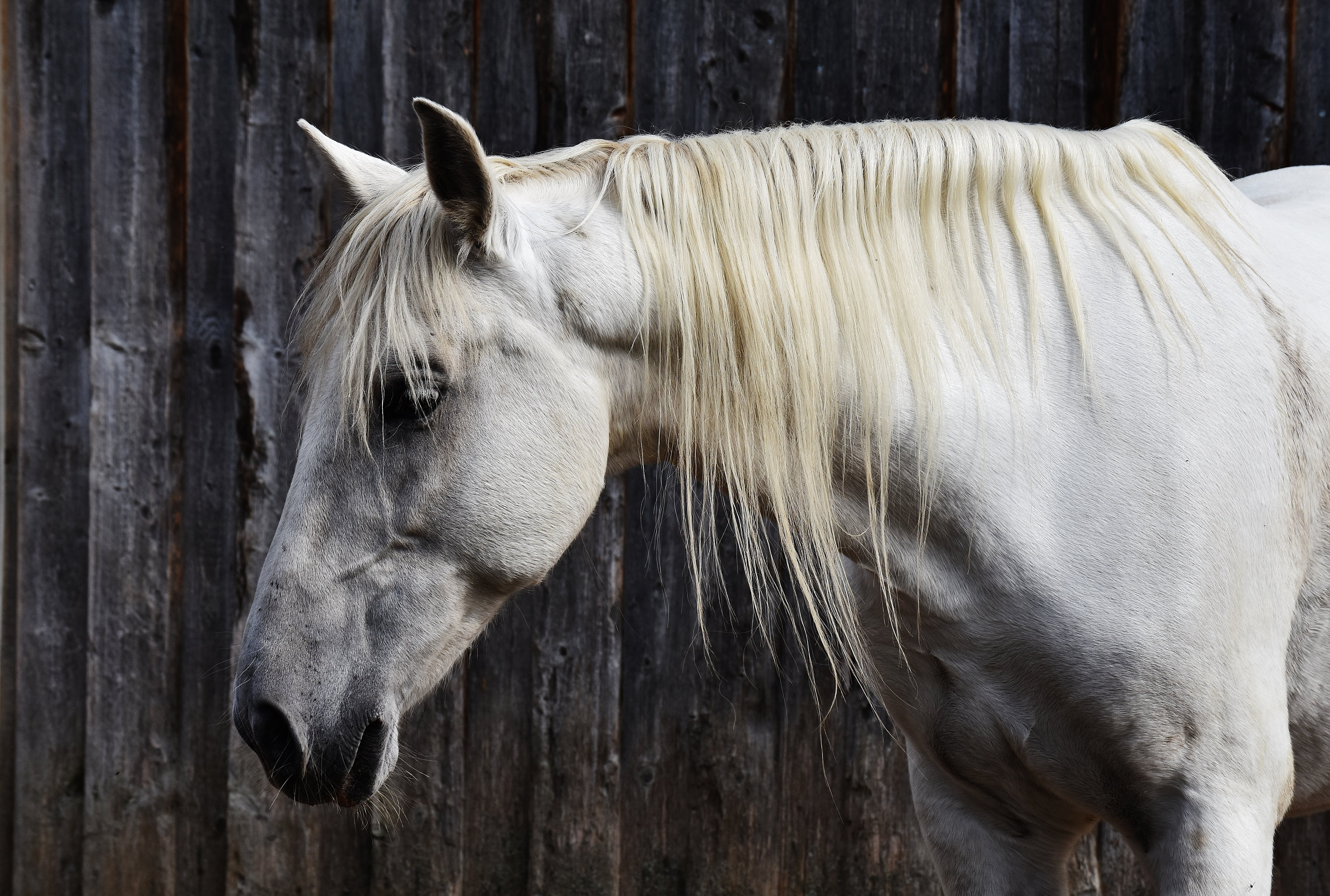 White Horse Beside Gray Surface