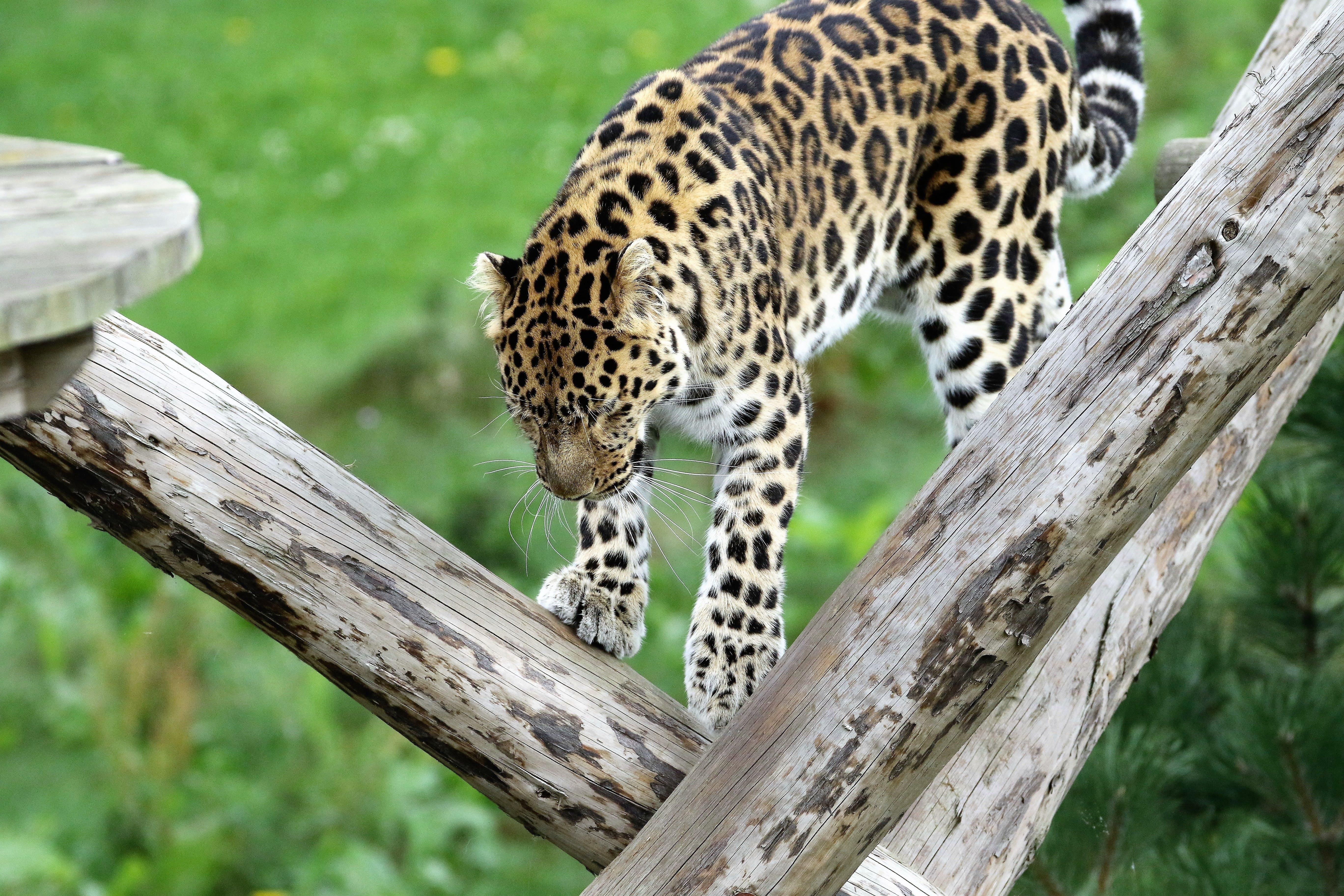 Free stock photo of wood, nature, animal, park
