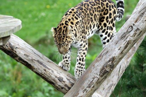 Fotos de stock gratuitas de animal, animal salvaje, árbol, bigotes