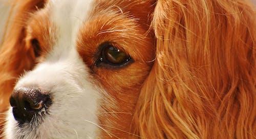 คลังภาพถ่ายฟรี ของ น่ารัก, ลูกสุนัข, สัตว์, สัตว์เลี้ยง