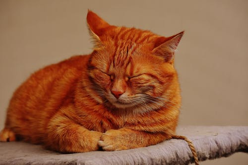 Orange Cat in Selective Focus Photo