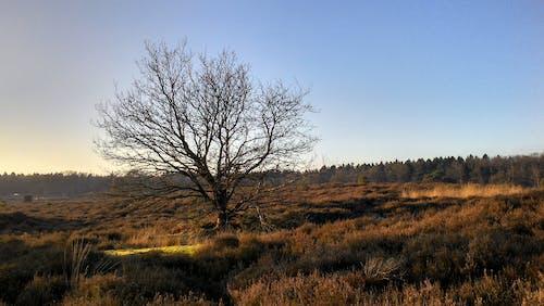 Gratis stockfoto met bomen, heide, landschap