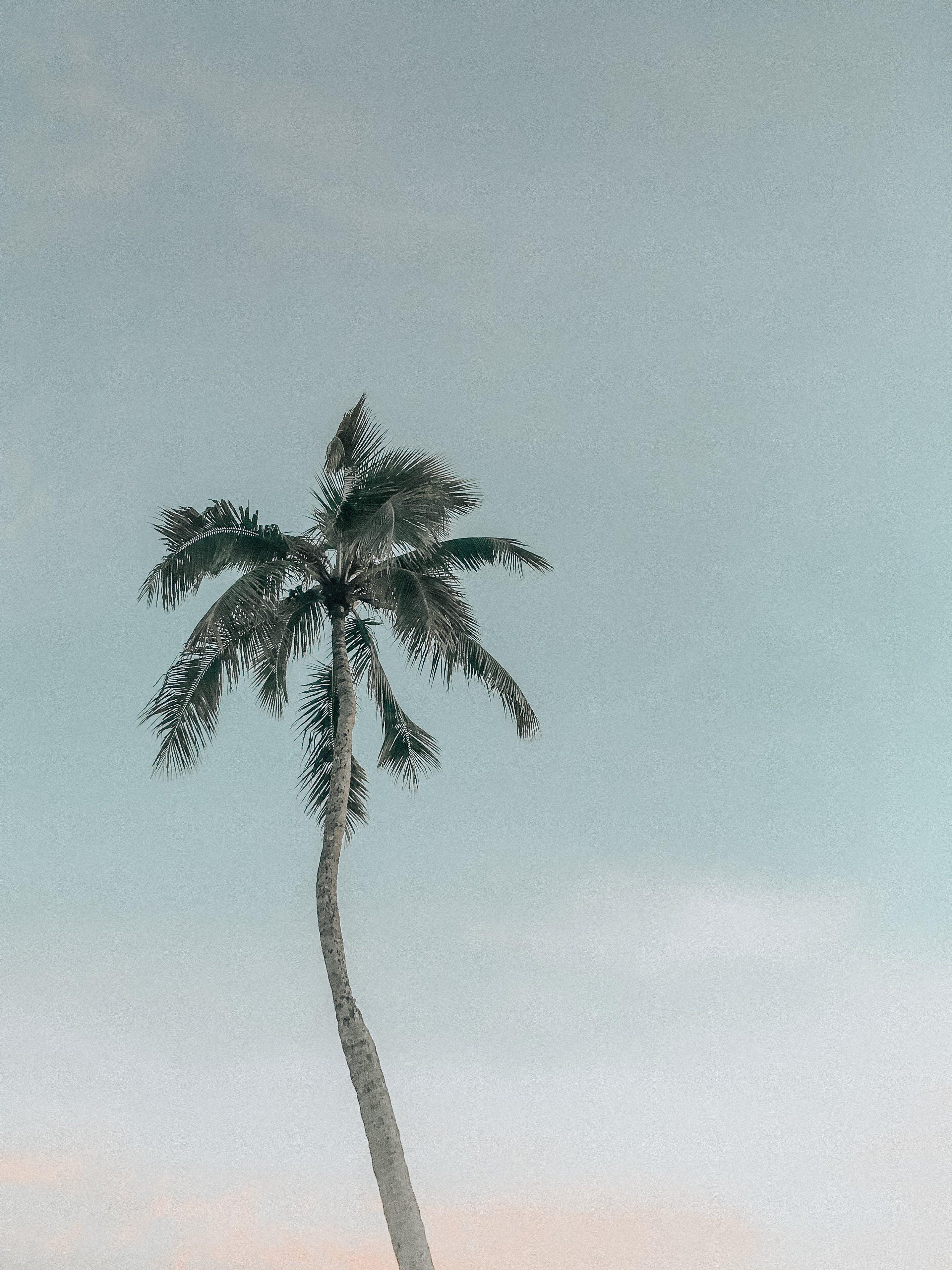 Безкоштовне стокове фото на тему «дерево, Кокосова Пальма, надворі, небо»
