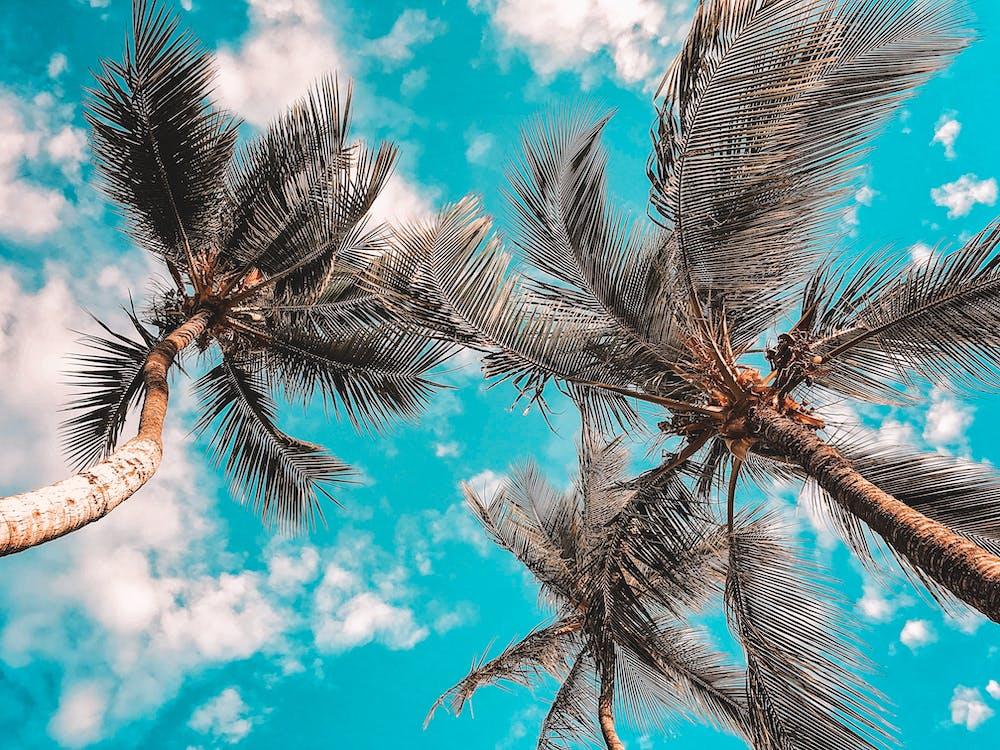 a l'aire lliure, arbres, cel