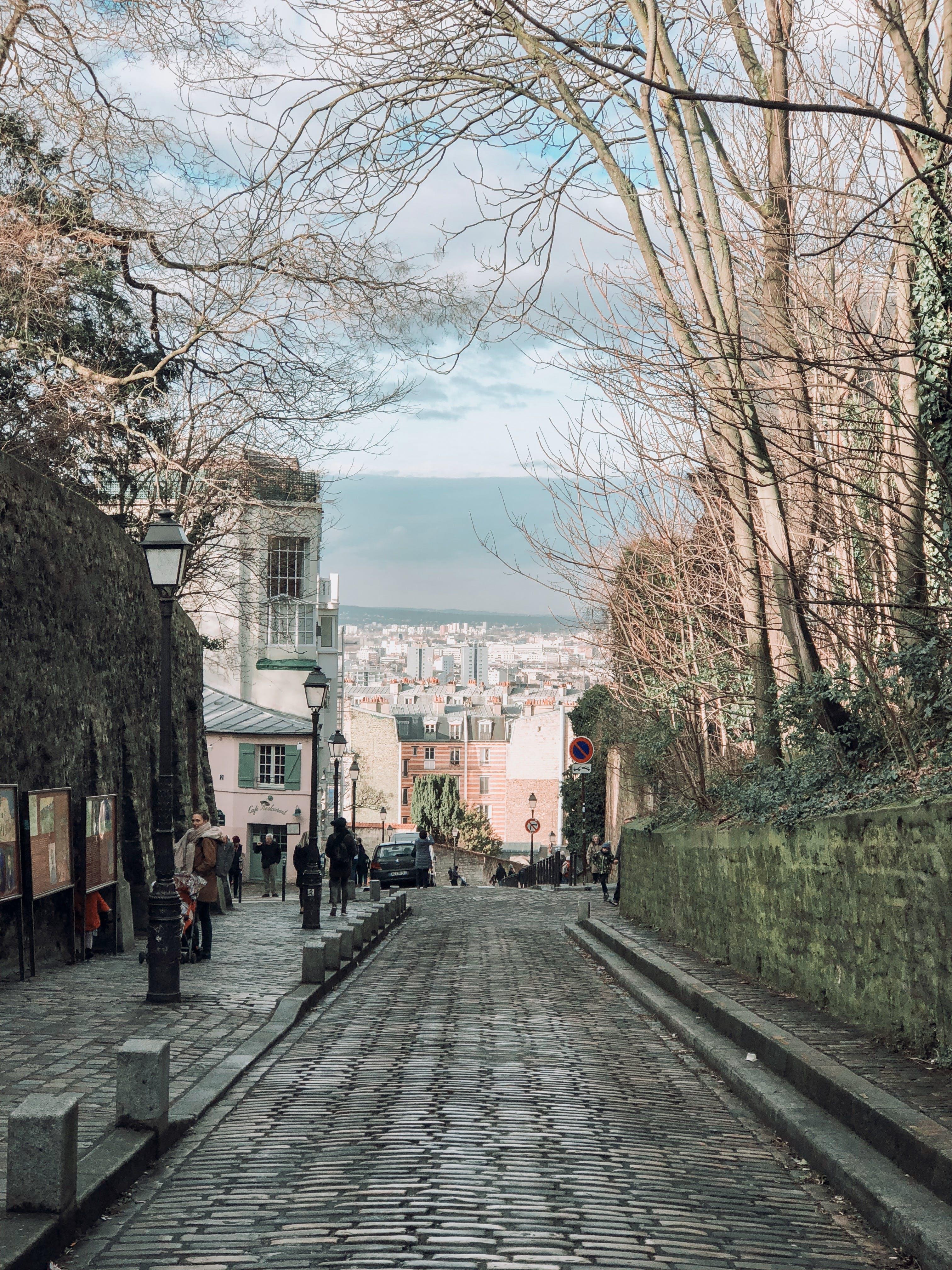 거리, 걷고 있는, 관광객, 나무의 무료 스톡 사진