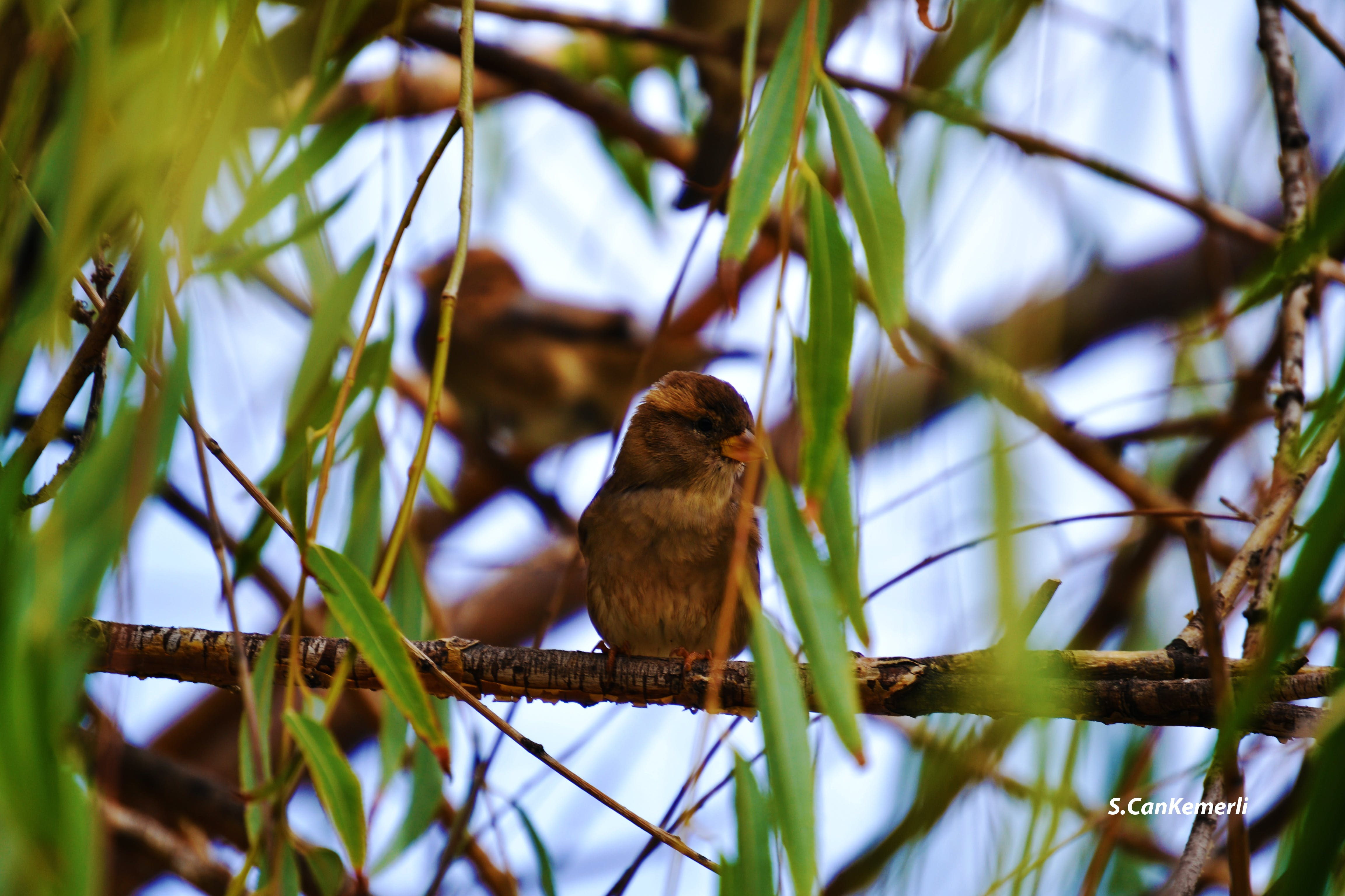 Gratis lagerfoto af #animals, #birds, #brun, #dyr