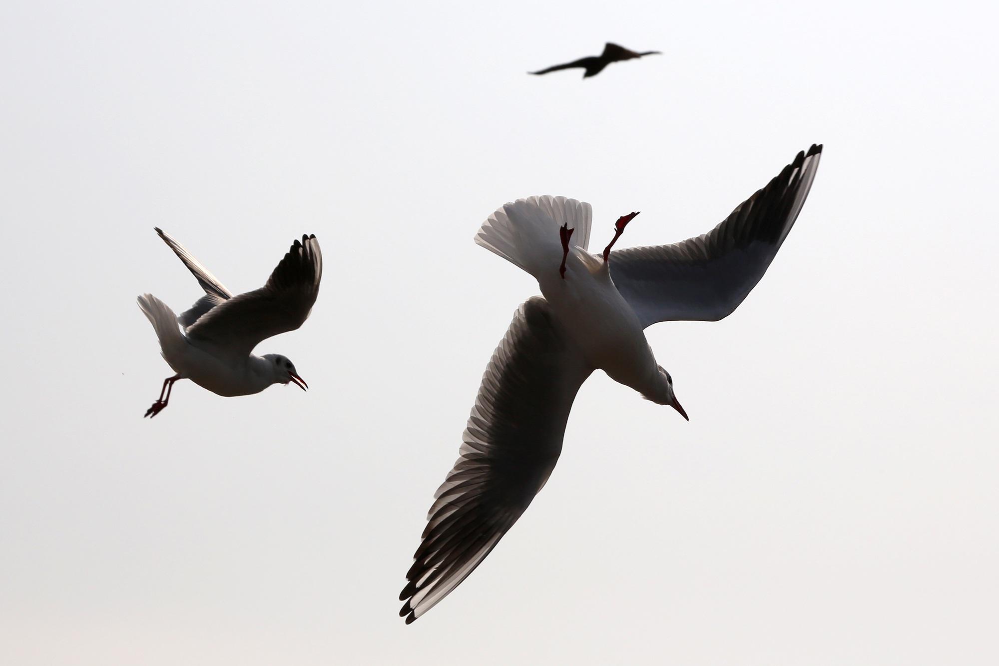 μεγάλο πουλί θαλάσσιο Ασιάτης/ισσα άνθρωπος σεξ