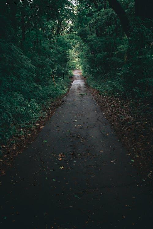 Ingyenes stockfotó aszfalt, erdő, fák, környezet témában
