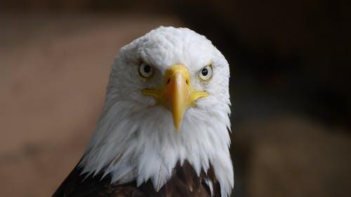 フライト, 動物, 羽毛, 翼の無料の写真素材