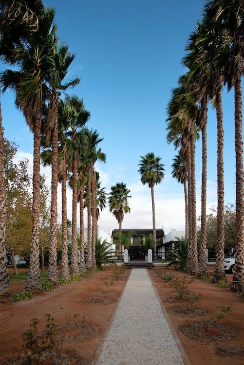 Photo of House Near Palm Trees