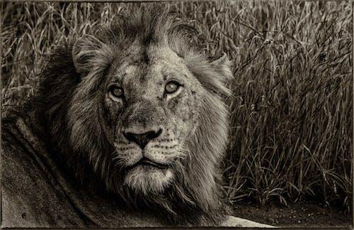 Gratis arkivbilde med dyr, dyrefotografering, dyreliv, jeger