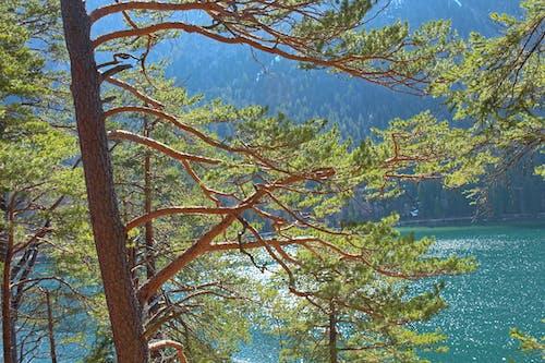 樹, 高山湖泊 的 免費圖庫相片