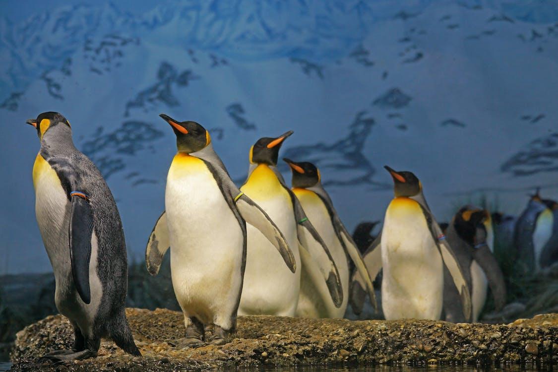 Penguins Walking on Brown Surface