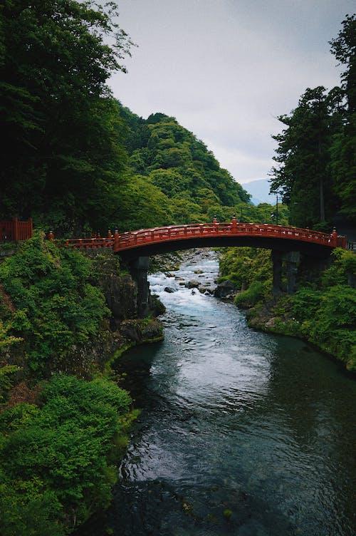 Cầu Bê Tông Nâu Giữa Cây