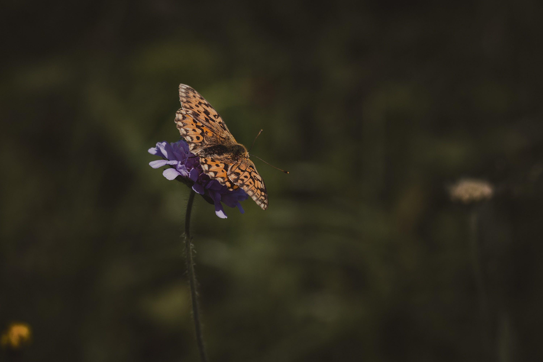 Free stock photo of nature, summer, twilight, animal