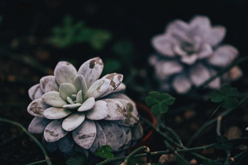 Selective Focus Photography of Gray Succulent Plant