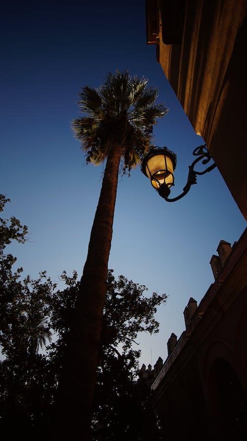 Kostenloses Stock Foto zu palme, sevilla, spanien