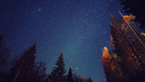 Ảnh lưu trữ miễn phí về bầu trời đêm, đêm, folgarida
