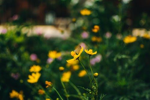Foto profissional grátis de atraente, borboleta, delicado, flora