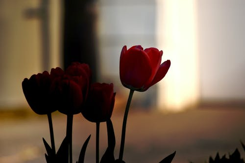 Free stock photo of beautiful flower, beautiful flowers, flower
