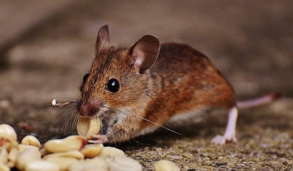 Free stock photo of food, eating, animal, cute