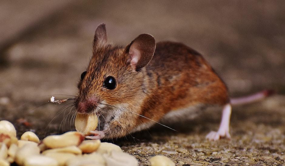 animal, blur, close-up